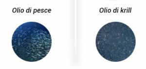 Confronto olio di pesce e olio di Krill